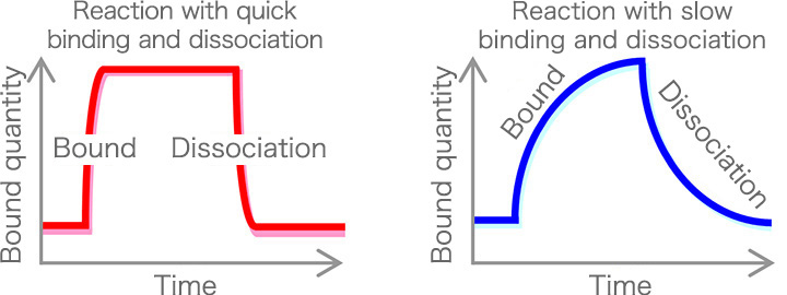 Reaction with quick binding and dissociation / Reaction with slow binding and dissociation